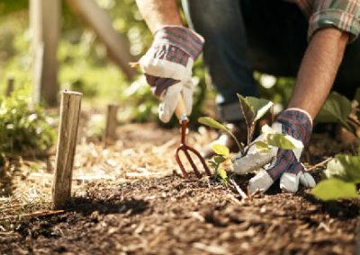 Lawn & Garden Safety